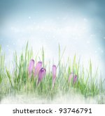 Winter or early spring nature background with frozen grass and crocus flowers. Spring floral background - stock photo