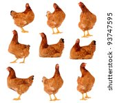 Set Of Brown Chicken Isolated...