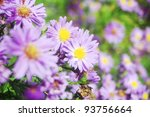 a natural background of beautiful purple flowers - stock photo