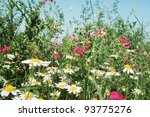 dense vegetation on a field in summer time. - stock photo