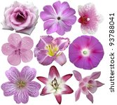 Stock photo collection of pink and purple flowers isolated on white 93788041