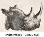 Rhinoceros Head Old...