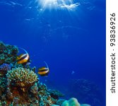 Beautiful Coral Reef With...