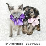 Stock photo super cute kitten and puppy together wearing pretty bows on a white background 93844318