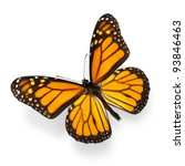 Stock photo monarch butterfly isolated on white ultra high resolution 93846463