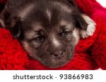 Close-up of cute sleeping puppy of 3 weeks old - stock photo