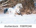 Appaloosa Pony Runs Gallop In...
