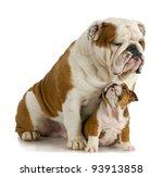 Big And Small Dog   English...