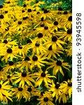 yellow flower meadow  rudbeckia ... | Shutterstock . vector #93945598