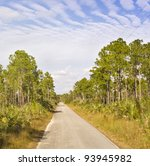 Rural road in the Florida Everglades National Park, Big Cypress tree forest preserve with blue cloudy sky on a sunny summer day.