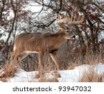 Profile Of Trophy Whitetail...