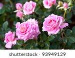 Stock photo rose garden 93949129
