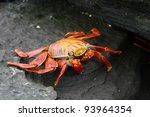 Sally Lightfoot Crab  Or...