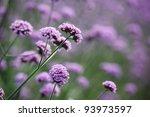 Purple Flowers On Beautiful...