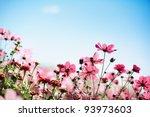 Daisy Flower Against Blue Sky.