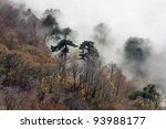 Autumn misty forest in mountains - stock photo