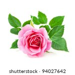 Stock photo pink rose closeup on a white background 94027642