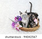 Stock photo cute puppy and kitten sitting in a basket together with spring flowers on a white background 94042567