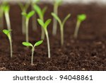 close up of green seedling... | Shutterstock . vector #94048861