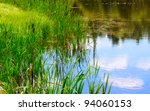 Pond And Water Plants At Summe...