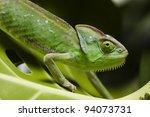 chameleon on the leaf   Shutterstock . vector #94073731