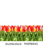 bunch of tulips isolated on a... | Shutterstock . vector #94098442