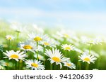 field of daisy flowers | Shutterstock . vector #94120639