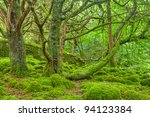 Moss Covered Forest In...