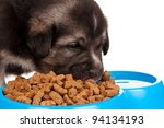 Cute puppy with bowl of dog food on a white background - stock photo
