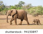 Stock photo a baby african elephant calf following its mother 94150897