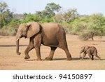 A Baby African Elephant Calf...