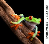 red eyed tree frog at night in... | Shutterstock . vector #94165480