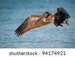 Brown Pelican  Pelecanus...