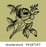 old rose illustration   Shutterstock . vector #94187197