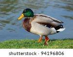 beautiful male mallard duck... | Shutterstock . vector #94196806