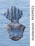 Alligator In Blue Swamp