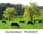 Happy Cows Grazing On A...