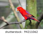 vibrant red lorikeet on a tree | Shutterstock . vector #94211062