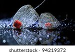 Physalis On Black Background