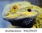portrait of a bearded dragon...   Shutterstock . vector #94229419