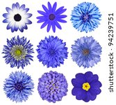 Various Blue Flowers Selection...