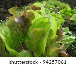 growing salad on the ground... | Shutterstock . vector #94257061