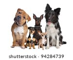 Stock photo group of five dogs sitting in front of a white background 94284739