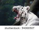 White Tiger Yawns On The Green...