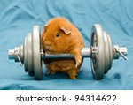 Stock photo orange pig 94314622