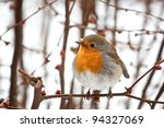 Robin On A Tree In A Snowy Day