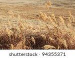 Dry Prairie Grass