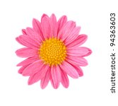 Pink Chrysanthemum Isolated On...