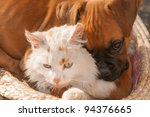 Stock photo a small cat and a small dog playing together as good friends 94376665