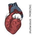 human heart  vintage engraving. ...   Shutterstock . vector #94381561